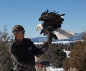 New Mexico, bald eagle, winter