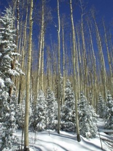 Santa Fe New Mexico snow aspens