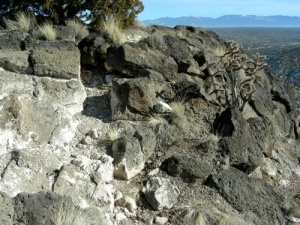 Vesicular basalt with white caliche weathering, common in arid climates