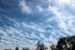 Variety is undulatus, but is it altocumulus or cirrocumulus?