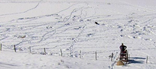 "A few elk ""beds"" in the snow"